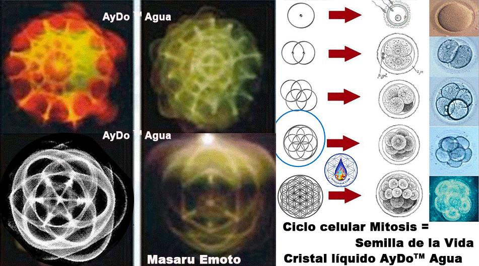 Cristal-liquido-agua manantial AYDO semilla de agua de vida aydoagua