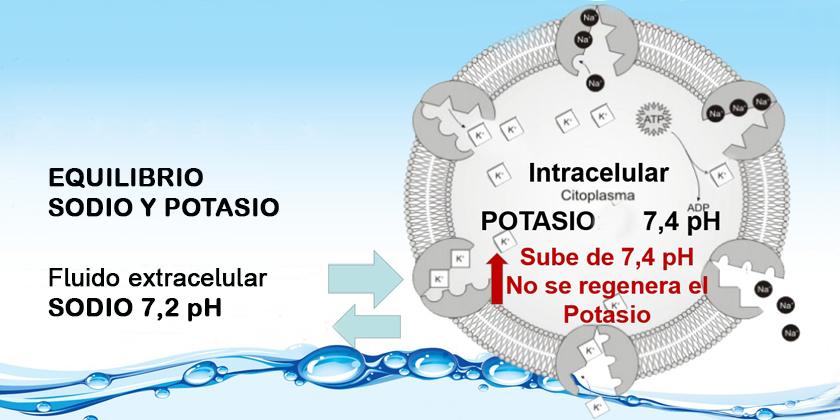 Equilibrio sodio potasio -aydoagua