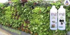 Cultivo hidroponico que es-como-donde-7-por que-aydoagua