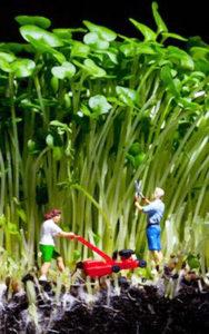 Productos agricultura ecologica-hidroponia bio encuentra -aydoagua